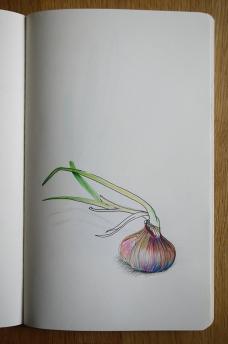 13cdsf_Onion_02
